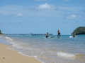 palm-cove-beach-2