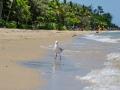 palm-cove-beach-9