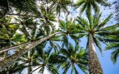 palm-cove-beach-17