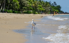 palm-cove-beach-9